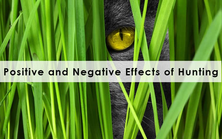 Positive and Negative Effects of Hunting